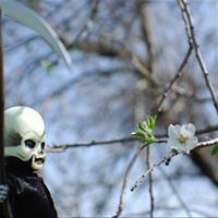 прогулка со Смертью - цифро-вариант