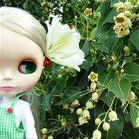Blythe - Cappucino Chat